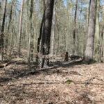 Tegeler Forst