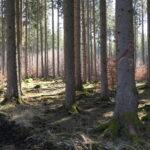 Wald-Stimmung