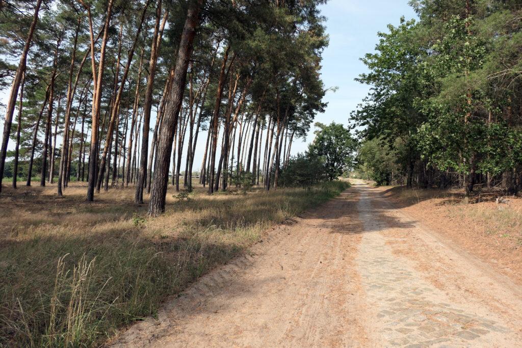 Waldweg durch lichte Wälder in Brandenburg