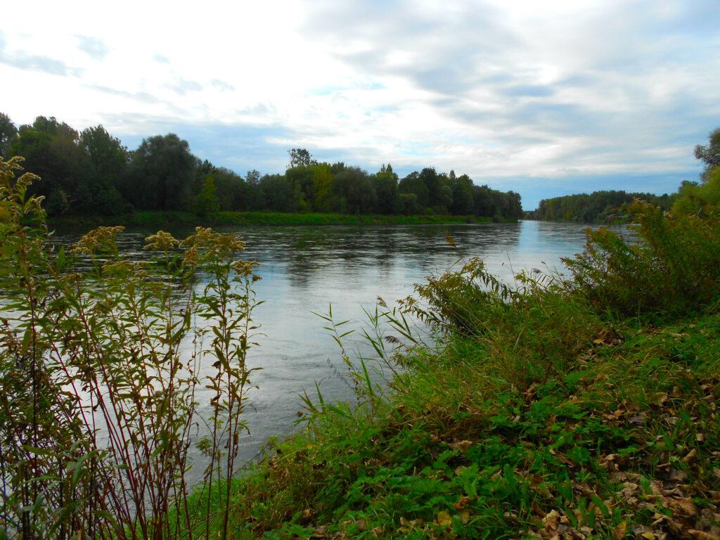 Die Donau bei Haderfleck